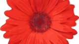 PW Annual Flower Sale